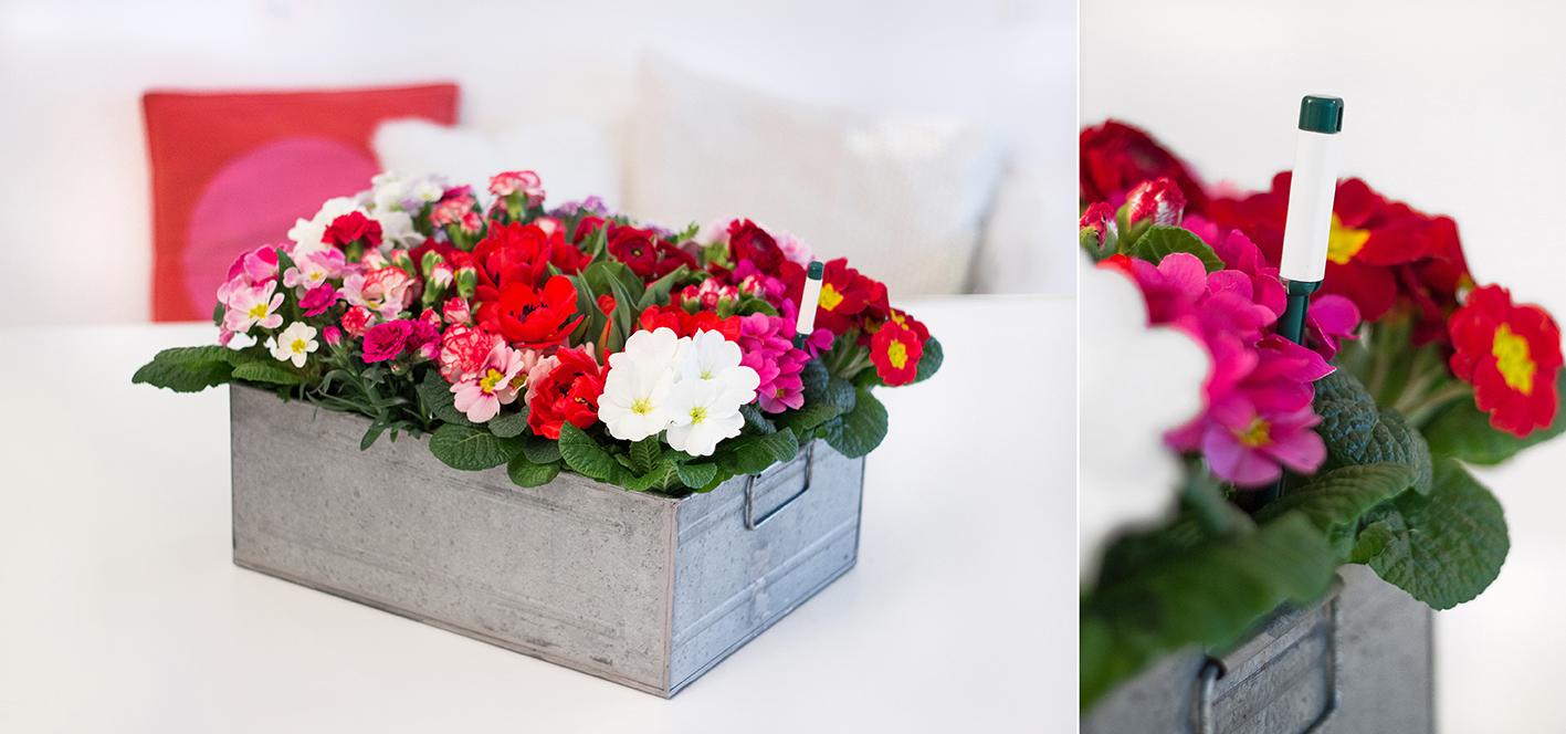 Blumenbeet DIY Anleitung