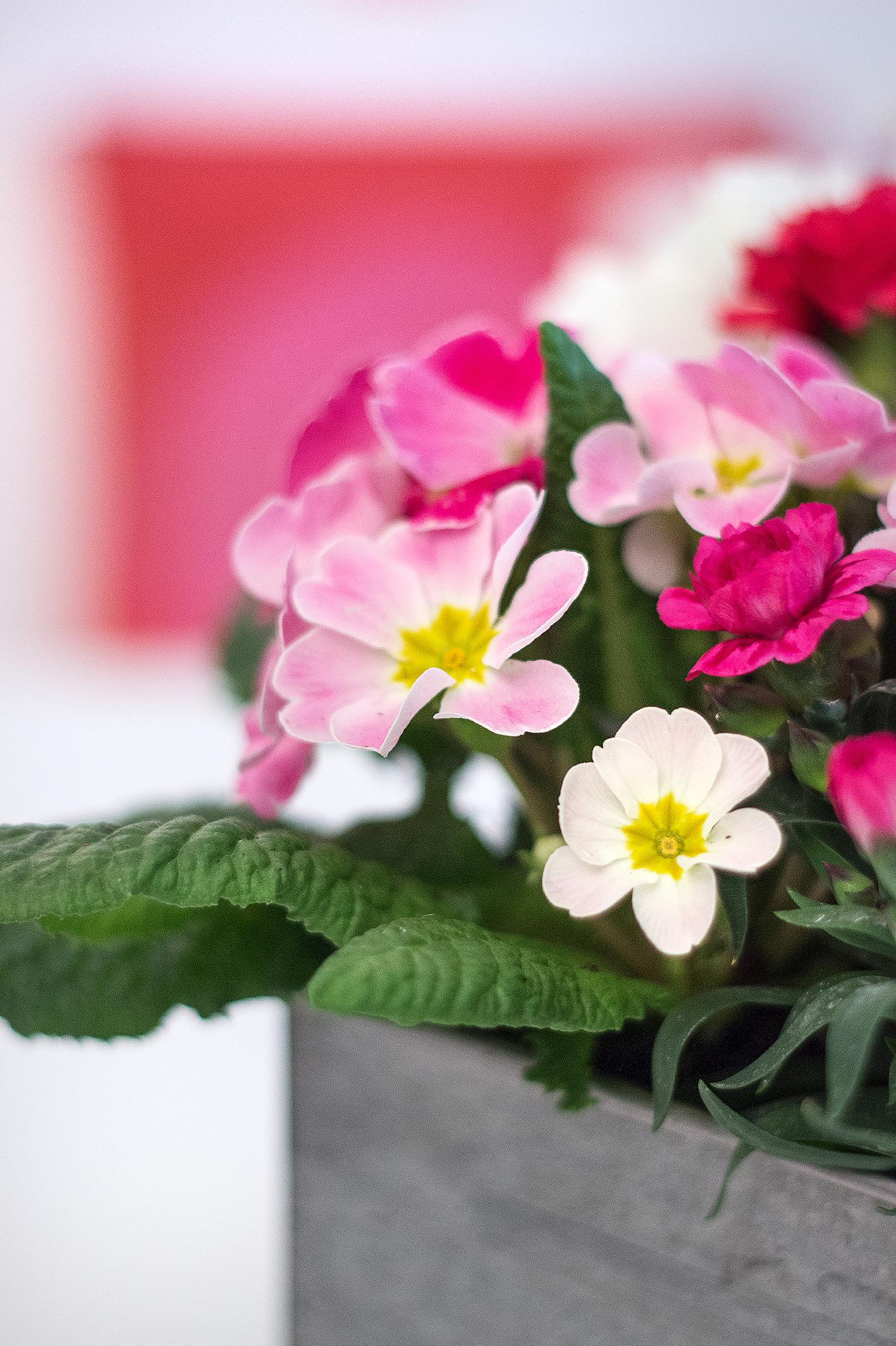 Blumen pflanzen Anleitung