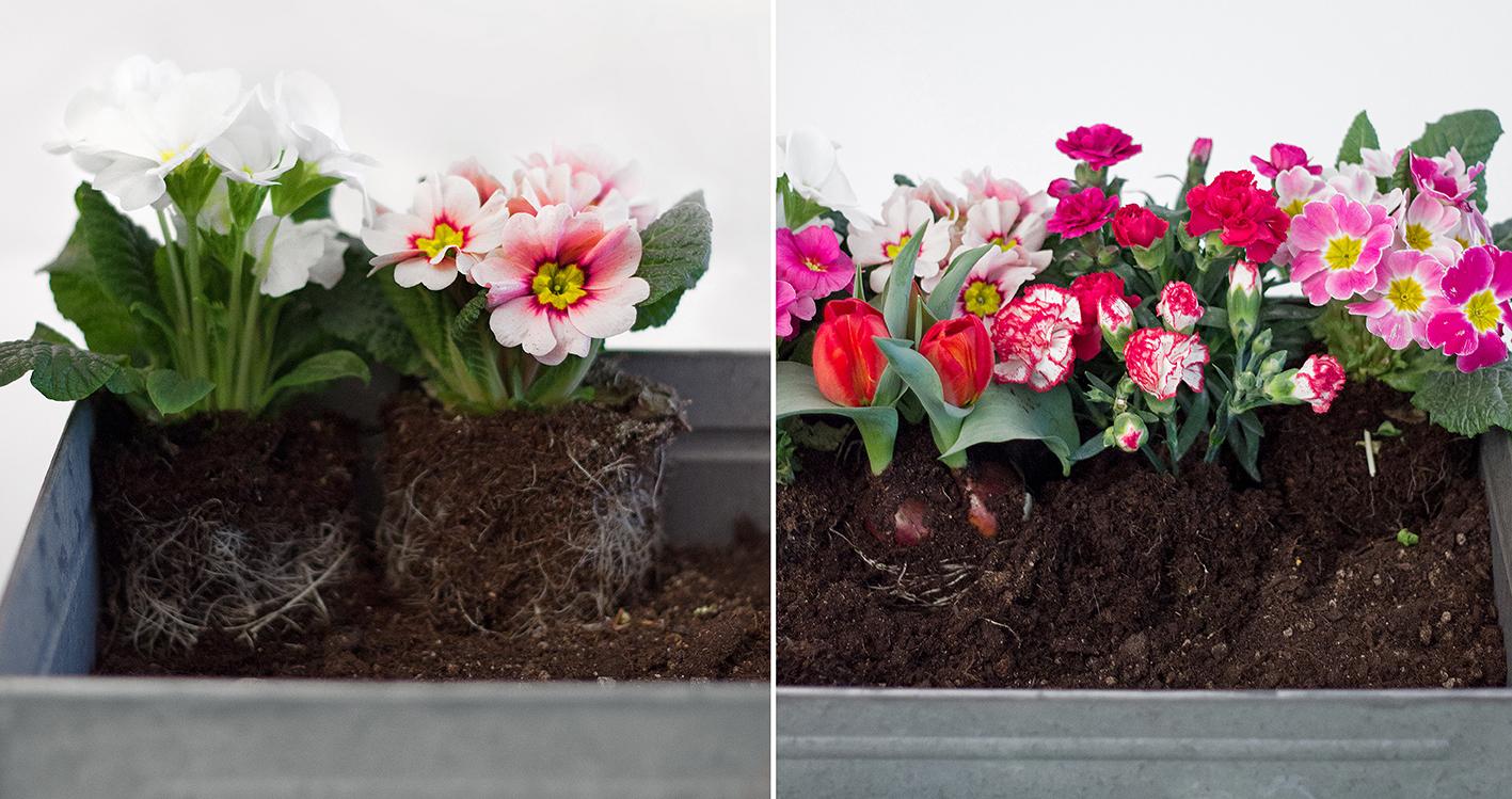 Blumenbeet Anleitung